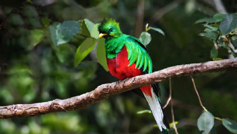 Biotopo-del-quetzal2-885×500