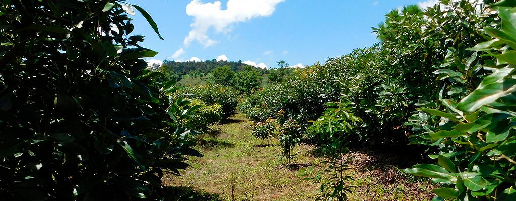 activities-in-guatemala