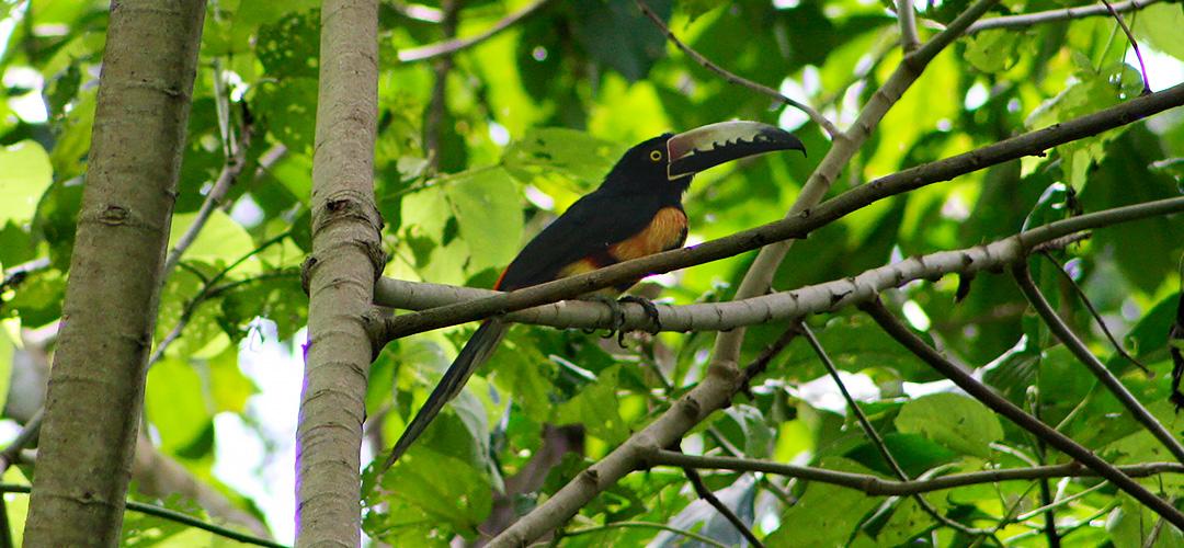 5-birdwathing