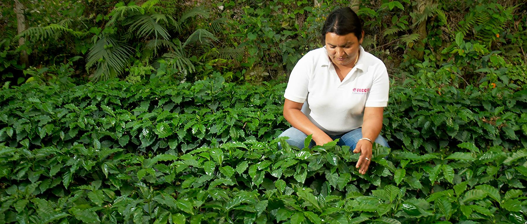 fecceg-in-guatemala