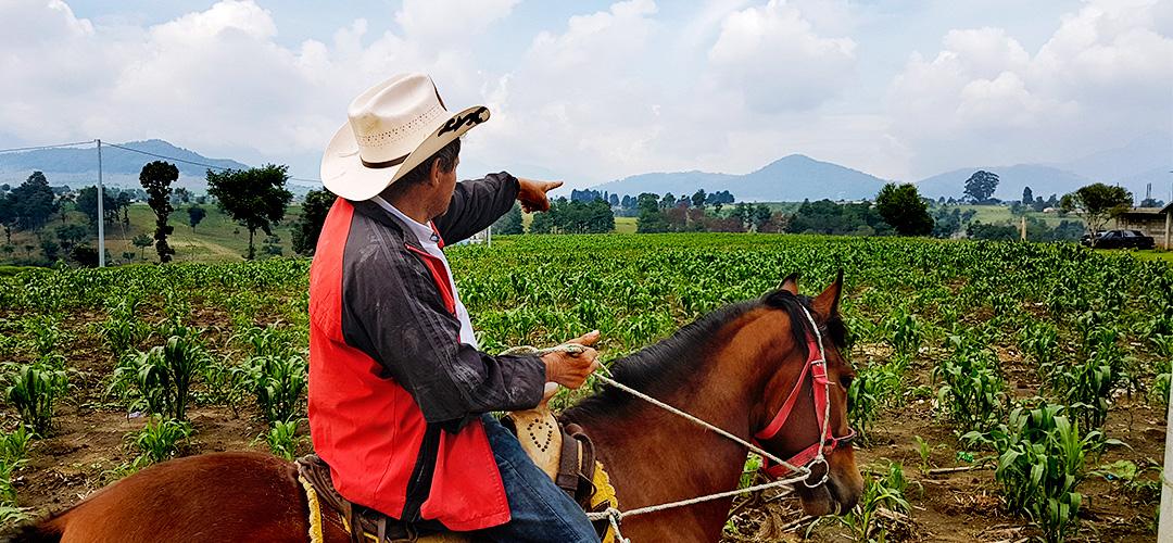 horsebak-xela